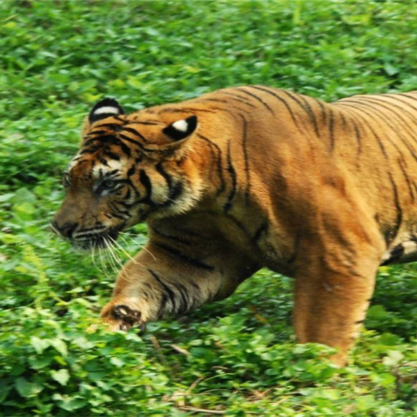 动物百科 - 大连森林动物园